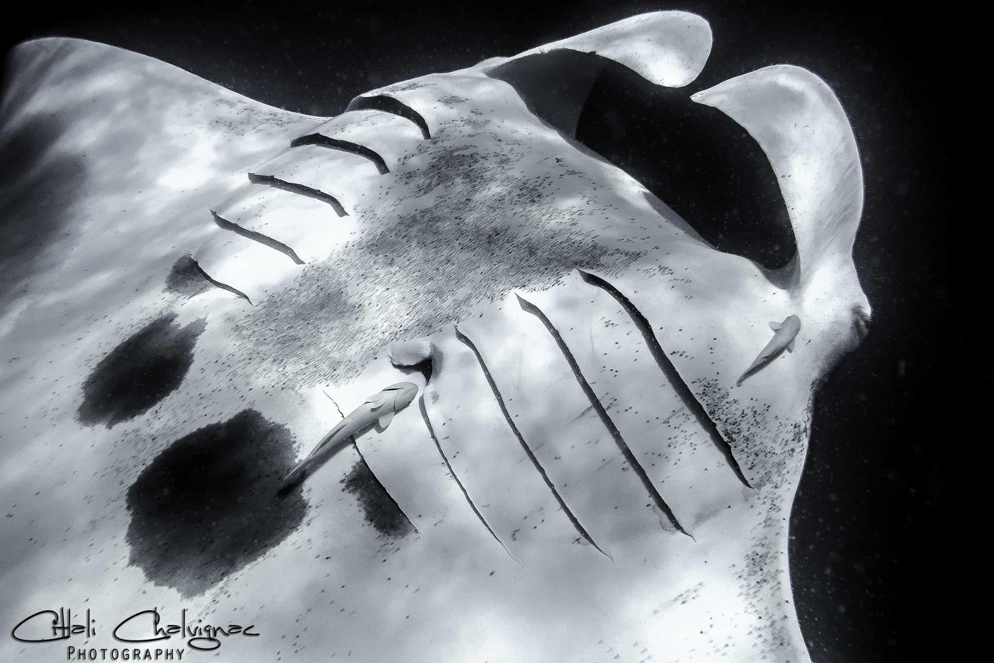 Galeria Black and white imagen 4 Citlali Chalvignac