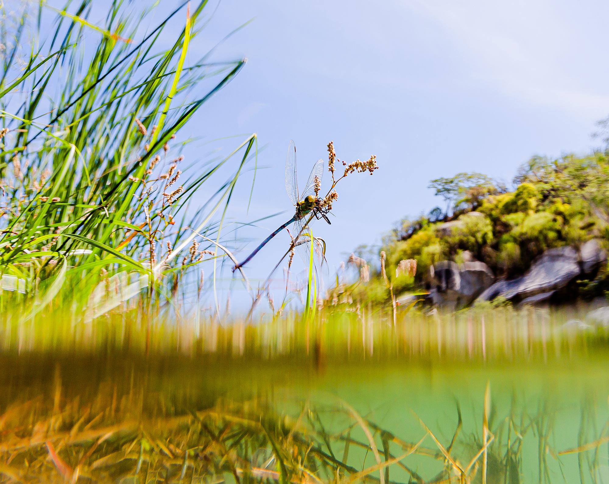 Galeria Nature imagen 8 Citlali Chalvignac