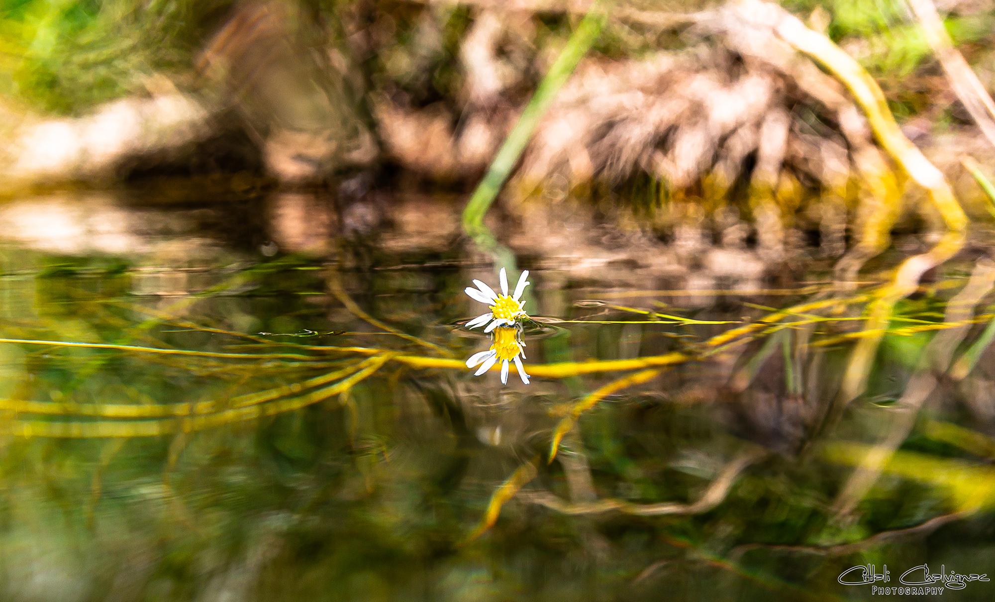 Galeria Nature imagen 9 Citlali Chalvignac
